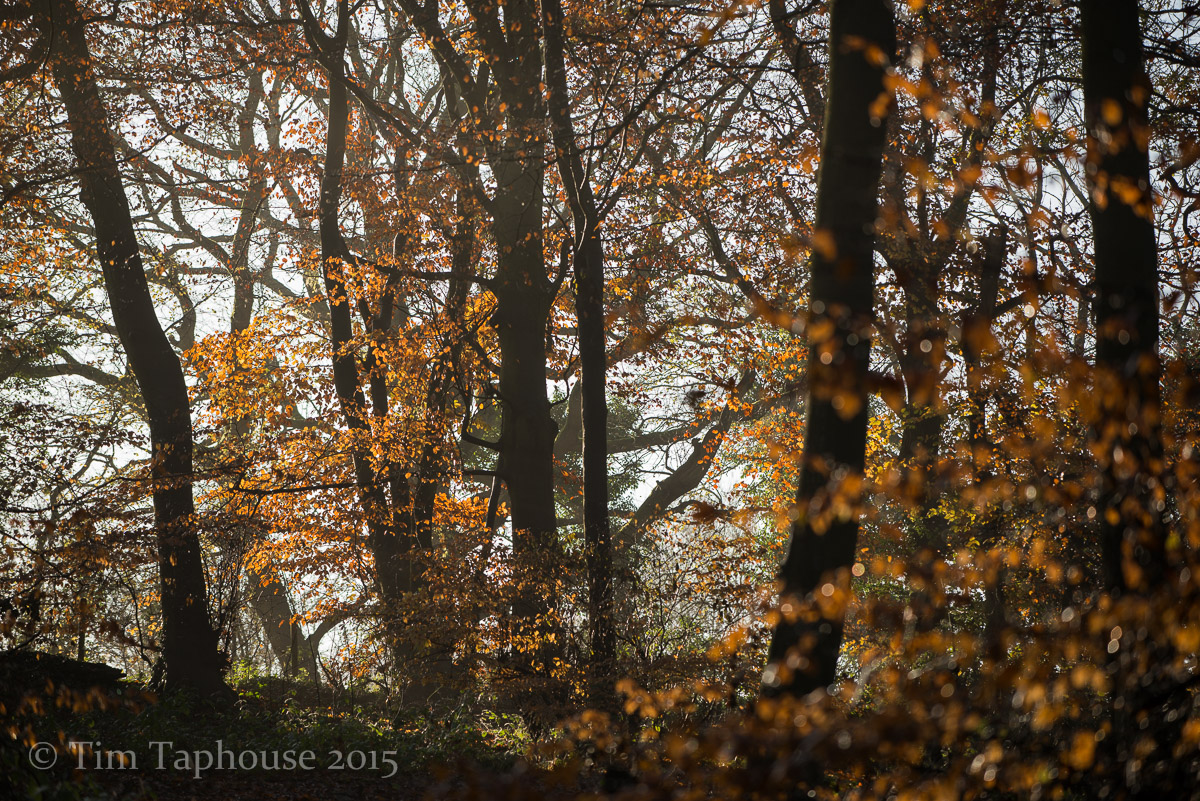 Autumn leaves, Twinberrow Woods, Dursley