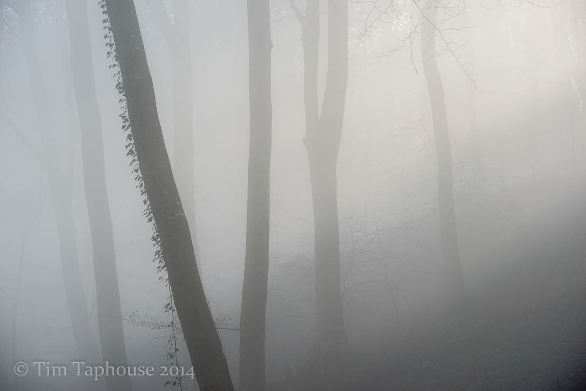Misty Twinberrow Woods