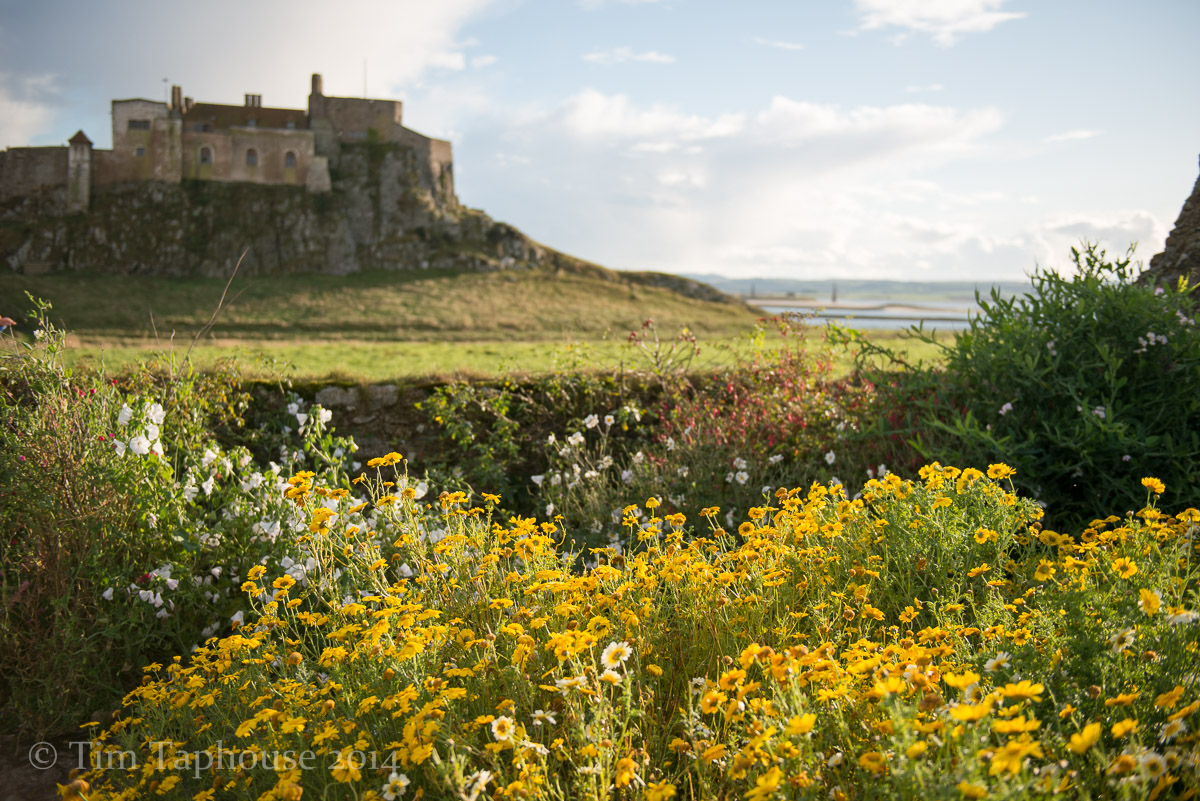 Gertrude Jekyll's Garden at Lindisfarne Castle, Holy Island, Northumbria